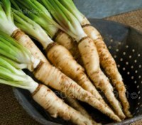 Salsify may be a chic new vegetable with the foodie crowd but it just happens to be an old-fashioned heritage root crop.