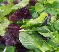 The Tuscan mix is a combination of classic Italian leaves that will enhance presentation and flavours of any dish.