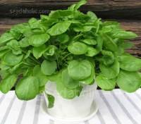 Cress: Watercress, Organic